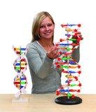 DNA Model XL (60 cm hoog)_