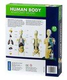 Het Menselijk Lichaam Model (Tweedekans)_