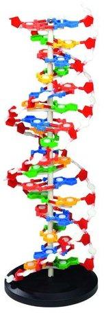 DNA Model XL (60 cm hoog)